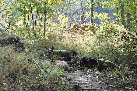 Rehe und Laub in der Lichtung im grünen Wald